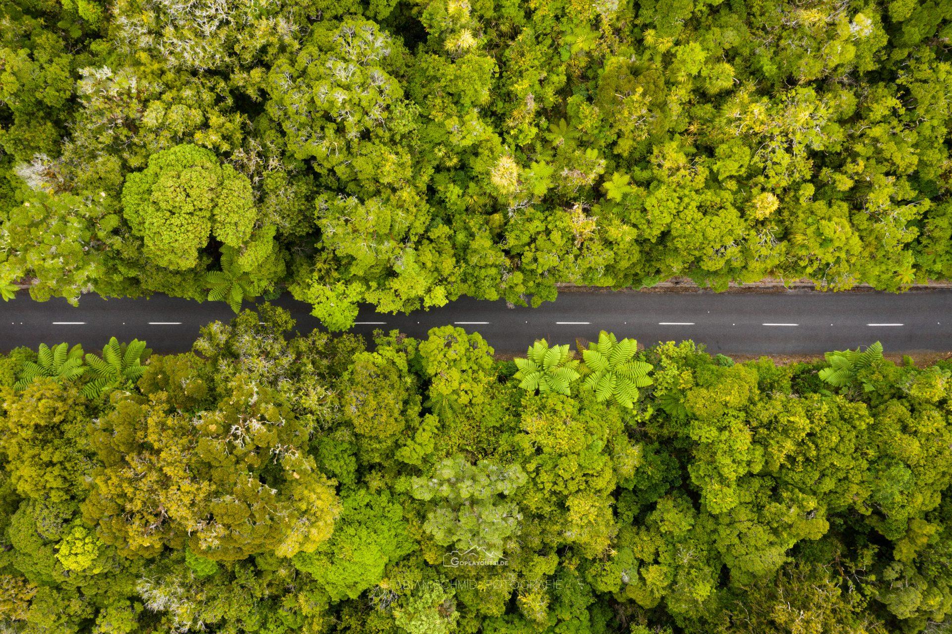 Urwald von oben